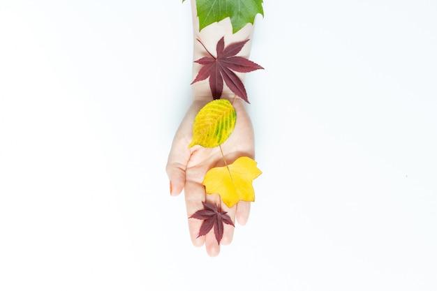 Mano que sostiene las hojas de otoño aisladas