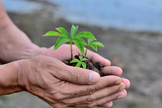 Mano que sostiene la planta en el suelo en la mano