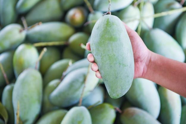 Mano que sostiene el mango verde para la venta y compra en el mercado de frutas en tailandia. cosecha de mango crudo fresco de la agricultura arbórea asiática