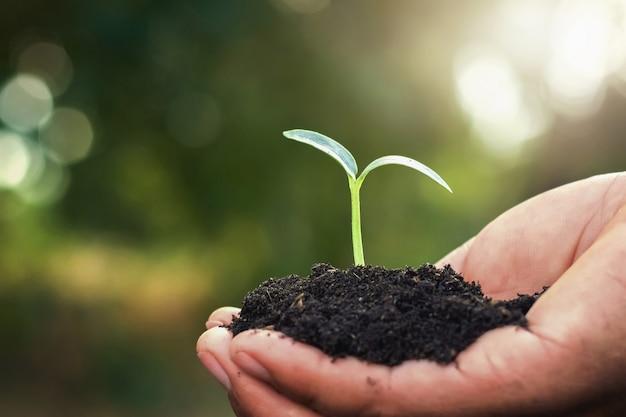 Mano que sostiene el pequeño árbol para plantar en el jardín