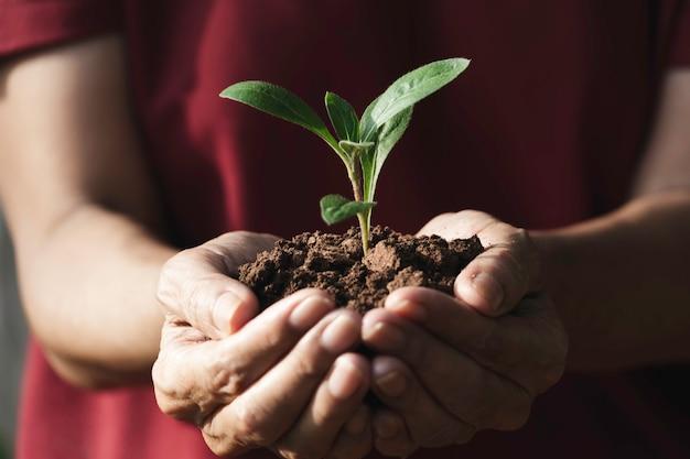 Mano que sostiene una planta verde y pequeña. plantas frescas verdes sobre fondo de naturaleza.