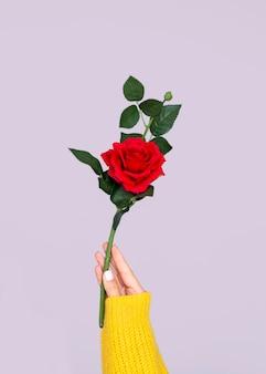Mano que sostiene la rosa preciosa