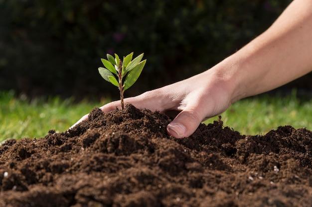 Mano removiendo la tierra de una planta