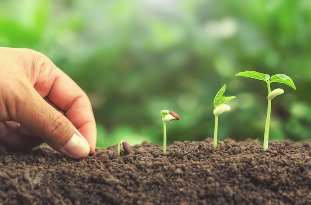 Mano sembrando semillas en suelo planta creciente concepto de paso