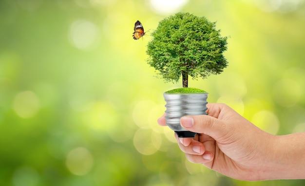 Mano sosteniendo una bombilla con un árbol y una mariposa sobre fondo de vegetación borrosa