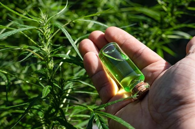 Mano sosteniendo una botella de vidrio con aceite de cbd en el fondo floreciente de flores de cannabis