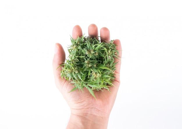 Mano sosteniendo marihuana fresca