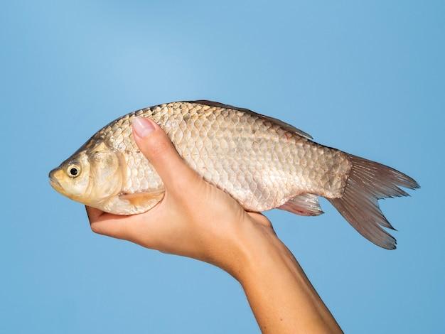 Mano sosteniendo pescado fresco sobre fondo azul