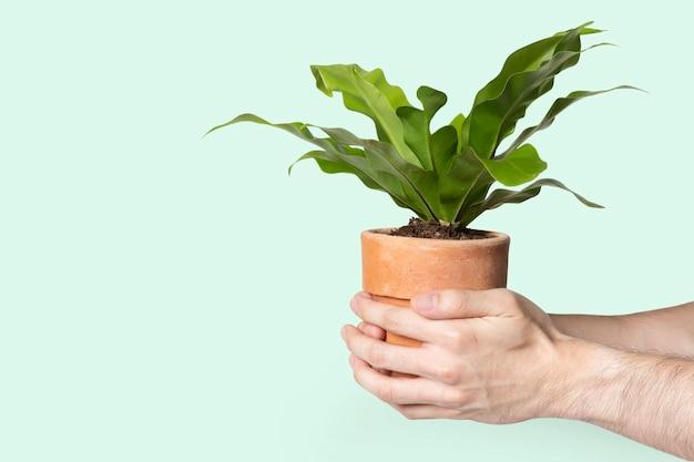 Mano sosteniendo la planta salvar el medio ambiente campaña
