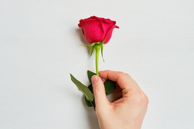 La mano sostiene una rosa roja vista superior.