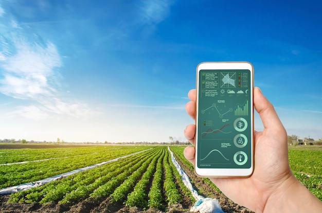 Una mano sostiene un teléfono inteligente con infografías en un campo de plantación de papas.