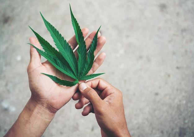 Mano sujetando la hoja de marihuana