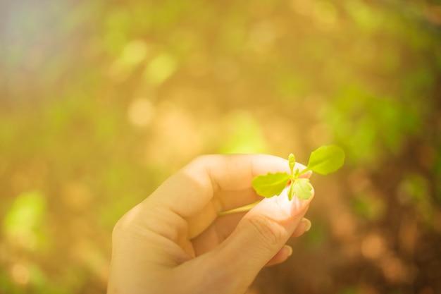 Mano sujetando una planta joven