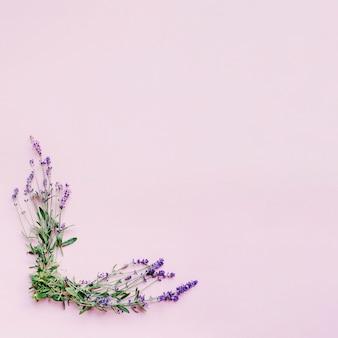 Manojo de delicadas flores de lavanda formando marco sobre fondo rosa
