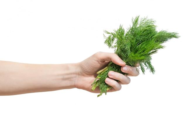 Un manojo de eneldo verde fresco en la mano de los hombres aislada en blanco
