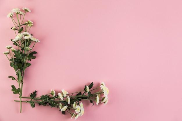 Manojo de flores de crisantemo sobre fondo rosa