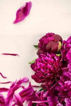 Manojo fresco de peonías púrpuras oscuras en fondo ligero
