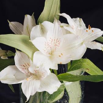 Manojo de hermosas flores blancas frescas en rocío en florero