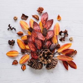 Manojo de hojas coloridas