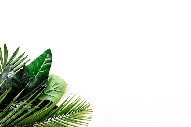 Manojo de hojas verdes frescas en la esquina del fondo blanco