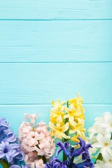 El manojo de jacintos florece en un fondo azul.