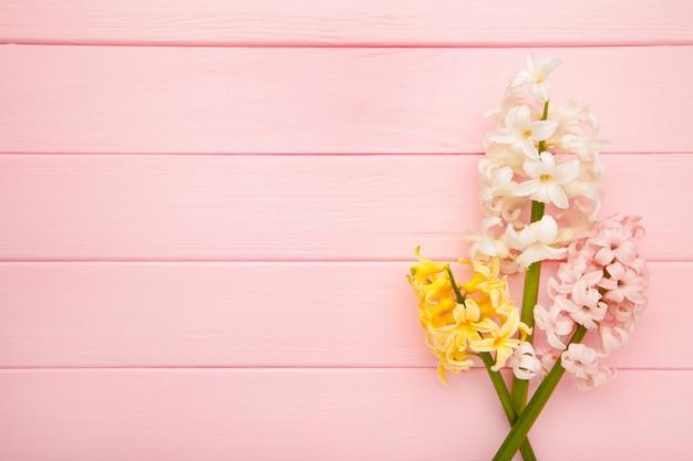 Manojo de jacintos florece en un fondo rosado. concepto de primavera