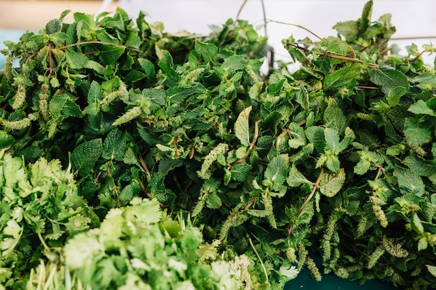 Manojo de menta verde fresca y perejil