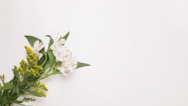 Manojo de plantas y flores en tallos con hojas verdes.