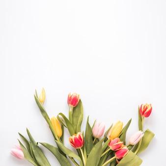 Manojo de tulipanes frescos brillantes con hojas verdes