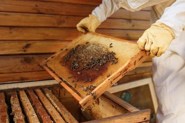 Las manos del apicultor sacan de la colmena un marco de madera con panal. recoge miel. apicultura