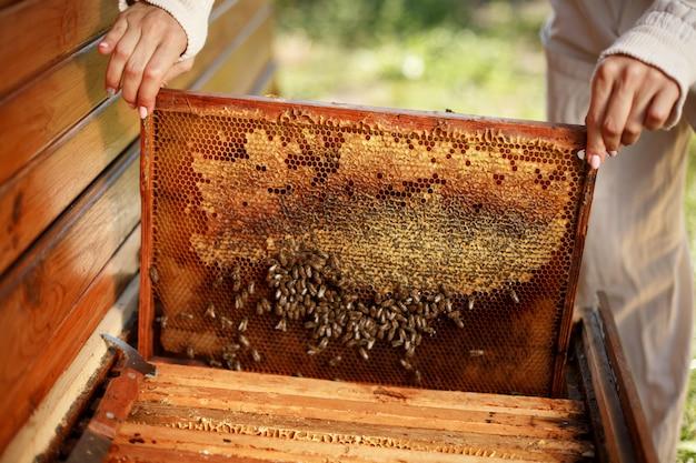 Las manos del apicultor sacan de la colmena un marco de madera con panal.