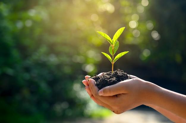 En manos de árboles que crecen plántulas.