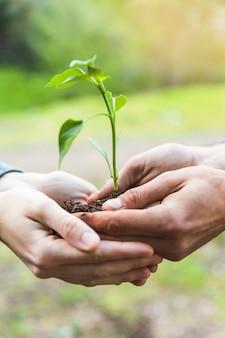 Manos de cultivo con árbol joven