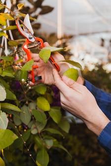 Manos de cultivo cortando ramitas