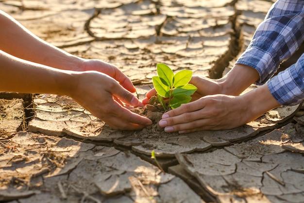 Manos de dos personas están plantando plantas en suelo seco