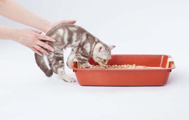 Manos empujando a un gatito a un baño de gato
