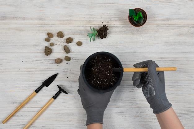 Manos femeninas con guantes de jardinería grises vierten la tierra en una maceta para plantar un cactus. trasplante de cactus