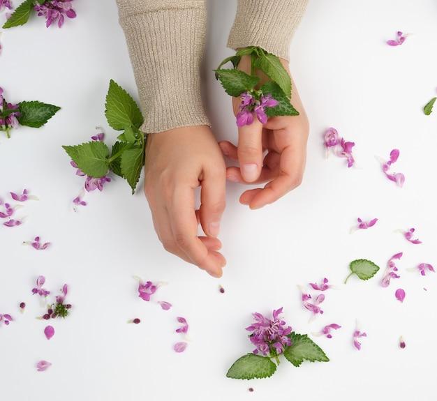 Manos femeninas y pequeñas flores rosadas sobre un fondo blanco, concepto de moda para el cuidado de la piel de las manos