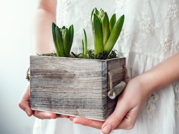 Manos femeninas sosteniendo brotes de jacintos en una caja en blanco