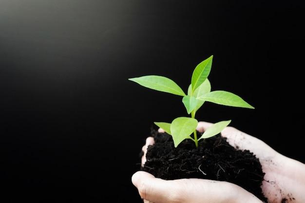 Manos femeninas sosteniendo plantas de brotes o plántulas de árboles verdes con suelo negro.
