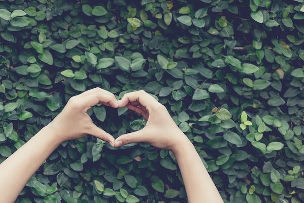Las manos en forma de corazón en la naturaleza dejan resumen de antecedentes