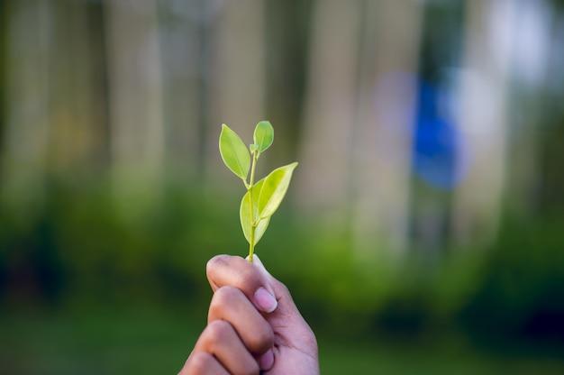 Manos y hojas verdes hermoso pico frondoso verde