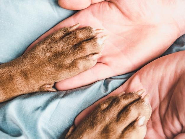 Las manos del hombre sosteniendo las patas de un cachorro joven