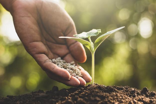 Las manos de los hombres están vertiendo fertilizantes químicos en las plántulas.