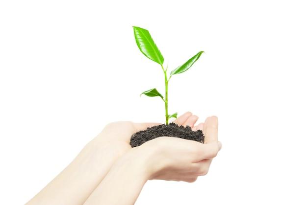 Manos humanas sosteniendo el concepto de nueva vida de la pequeña planta verde