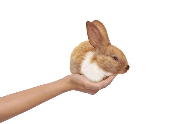 Manos humanas sosteniendo lindo conejo aislado. felices pascuas