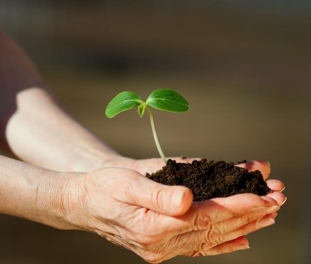 Manos humanas sosteniendo una pequeña planta verde con tierra