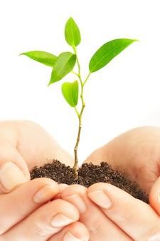 Las manos humanas sostienen y preservan una planta joven