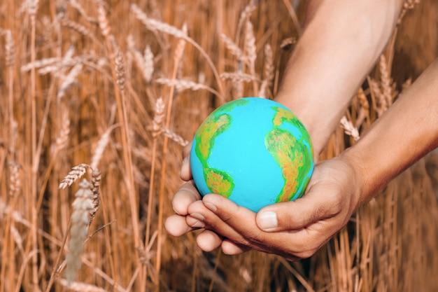 Manos masculinas con el modelo del planeta tierra sobre un fondo de espigas en un campo, símbolo de agricultura mundial