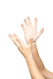 Manos masculinas vacías sosteniendo palmas aisladas